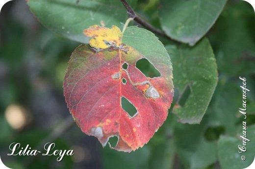 Вряд ли кто будет оспаривать, что осень - во всём мире общепризнанная ткачиха ковров. Её мастерство способно пленить любого! фото 32
