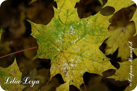 Вряд ли кто будет оспаривать, что осень - во всём мире общепризнанная ткачиха ковров. Её мастерство способно пленить любого! фото 38