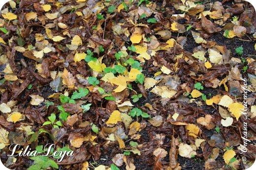 Вряд ли кто будет оспаривать, что осень - во всём мире общепризнанная ткачиха ковров. Её мастерство способно пленить любого! фото 4