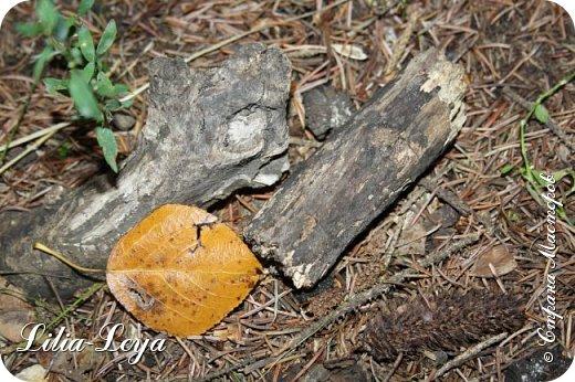 Вряд ли кто будет оспаривать, что осень - во всём мире общепризнанная ткачиха ковров. Её мастерство способно пленить любого! фото 42
