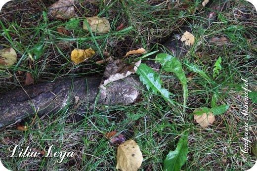 Вряд ли кто будет оспаривать, что осень - во всём мире общепризнанная ткачиха ковров. Её мастерство способно пленить любого! фото 43