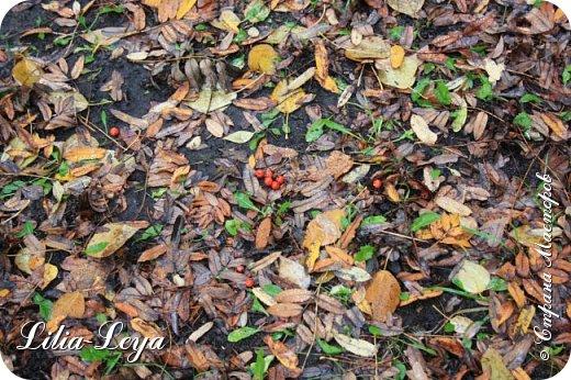 Вряд ли кто будет оспаривать, что осень - во всём мире общепризнанная ткачиха ковров. Её мастерство способно пленить любого! фото 5