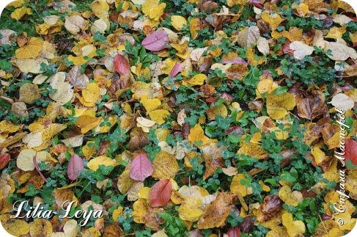 Вряд ли кто будет оспаривать, что осень - во всём мире общепризнанная ткачиха ковров. Её мастерство способно пленить любого! фото 6