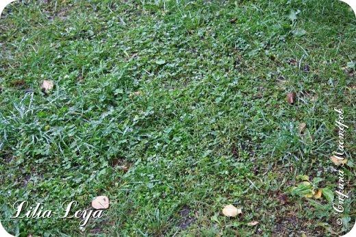 Вряд ли кто будет оспаривать, что осень - во всём мире общепризнанная ткачиха ковров. Её мастерство способно пленить любого! фото 7