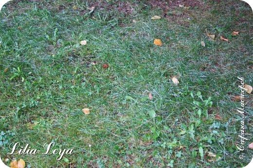 Вряд ли кто будет оспаривать, что осень - во всём мире общепризнанная ткачиха ковров. Её мастерство способно пленить любого! фото 8