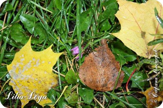 Вряд ли кто будет оспаривать, что осень - во всём мире общепризнанная ткачиха ковров. Её мастерство способно пленить любого! фото 9
