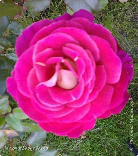 Частичная вышивка крестом , вышиты только розы.  фото 8