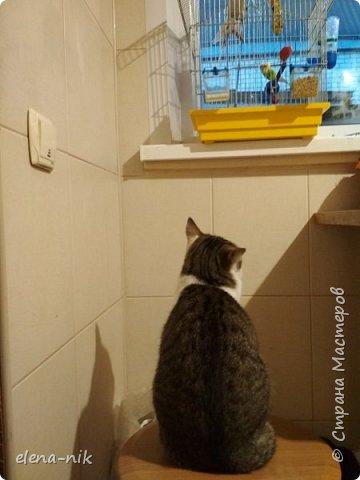 Добрый вечер!Проверьте свои холодильники, не стащил ли  кусочек сыра мышонок у вас? фото 6