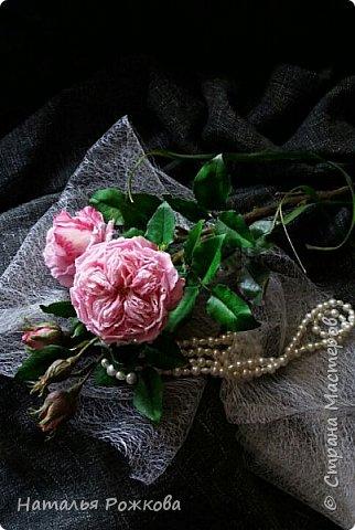 Роза абрахам-дерби фото 13