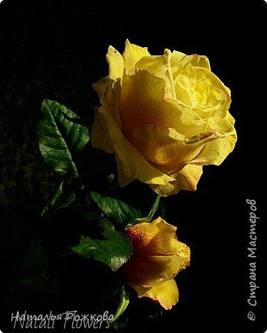 Роза абрахам-дерби фото 10