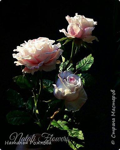 Роза абрахам-дерби фото 9