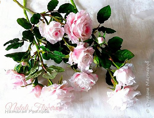 Роза абрахам-дерби фото 8
