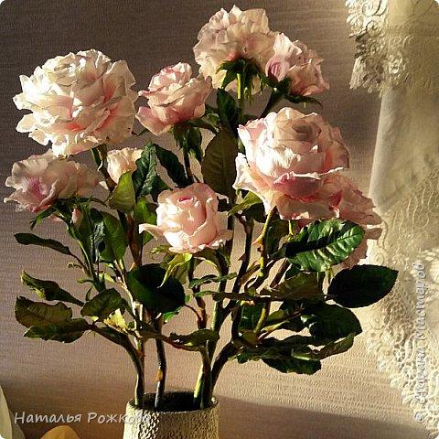 Роза абрахам-дерби фото 7