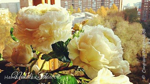 Роза абрахам-дерби фото 15