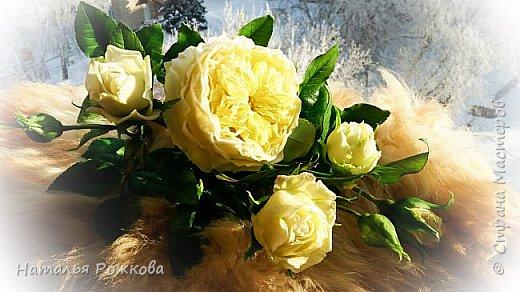 Роза абрахам-дерби фото 12