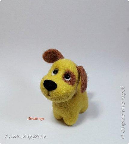 Собачка фото 1