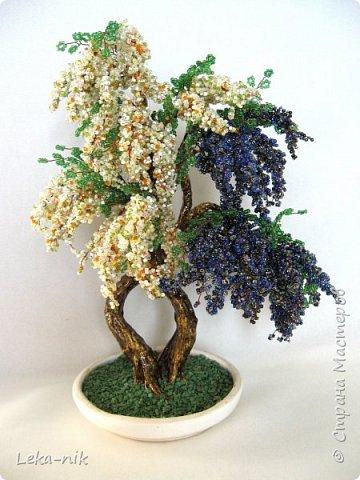 деревья фото 2