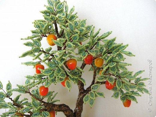 яблоня фото 3