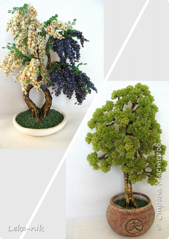 деревья фото 1