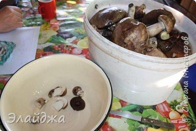 Привет всем!! В лесу много грибов! Собирать весело и интересно! Лес полон всякого добра-красивые веточки, листики, шишки, желуди... птички поют. А вот чистить и перерабатывать...тяжко! Хотя зимой отличная закуска и к празднику ароматные заготовочки всегда украсят стол. Сегодня я хочу поделиться рецептами.  Грибы я сушу,  солю, мариную и  готовлю грибную икру для вареников и пицы,  консервирую жаренными для картошечки. фото 4