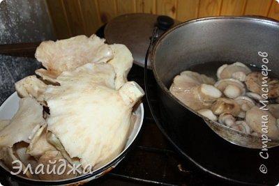 Привет всем!! В лесу много грибов! Собирать весело и интересно! Лес полон всякого добра-красивые веточки, листики, шишки, желуди... птички поют. А вот чистить и перерабатывать...тяжко! Хотя зимой отличная закуска и к празднику ароматные заготовочки всегда украсят стол. Сегодня я хочу поделиться рецептами.  Грибы я сушу,  солю, мариную и  готовлю грибную икру для вареников и пицы,  консервирую жаренными для картошечки. фото 19