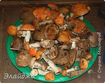 Привет всем!! В лесу много грибов! Собирать весело и интересно! Лес полон всякого добра-красивые веточки, листики, шишки, желуди... птички поют. А вот чистить и перерабатывать...тяжко! Хотя зимой отличная закуска и к празднику ароматные заготовочки всегда украсят стол. Сегодня я хочу поделиться рецептами.  Грибы я сушу,  солю, мариную и  готовлю грибную икру для вареников и пицы,  консервирую жаренными для картошечки. фото 1