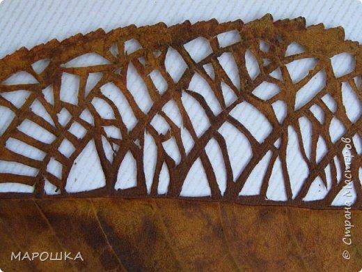 новая фотосессия: вырезала маникюрными ножницами по дубовому листу аж в 2015 году - отлично сохранились! фото 9