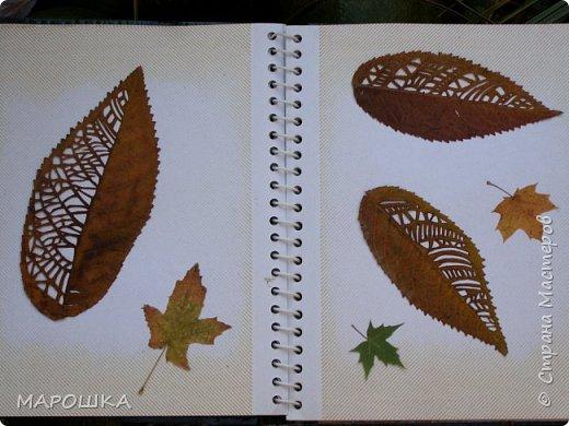 новая фотосессия: вырезала маникюрными ножницами по дубовому листу аж в 2015 году - отлично сохранились! фото 8