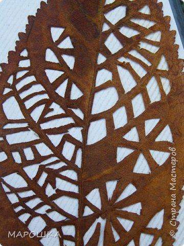 новая фотосессия: вырезала маникюрными ножницами по дубовому листу аж в 2015 году - отлично сохранились! фото 6