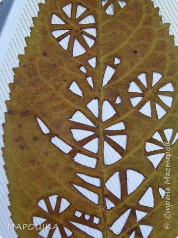 новая фотосессия: вырезала маникюрными ножницами по дубовому листу аж в 2015 году - отлично сохранились! фото 5