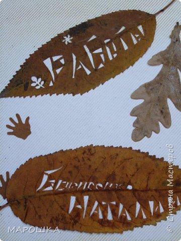новая фотосессия: вырезала маникюрными ножницами по дубовому листу аж в 2015 году - отлично сохранились! фото 12