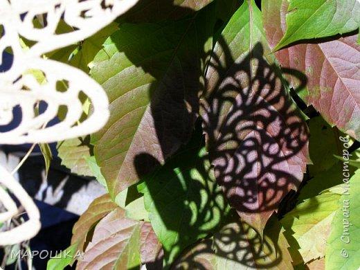 новая фотосессия: вырезала маникюрными ножницами по дубовому листу аж в 2015 году - отлично сохранились! фото 2