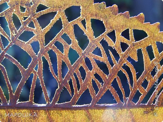 новая фотосессия: вырезала маникюрными ножницами по дубовому листу аж в 2015 году - отлично сохранились! фото 3