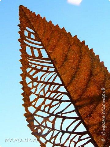 новая фотосессия: вырезала маникюрными ножницами по дубовому листу аж в 2015 году - отлично сохранились! фото 10