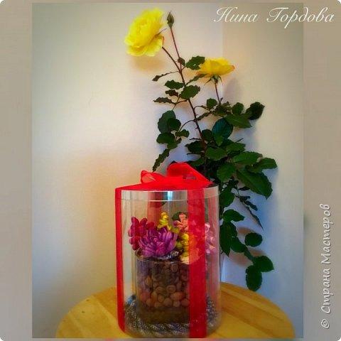 Мои любимые суккуленты , оформленные в арома- композицию. Такой вот получился подарок для моей подруги на юбилей фото 5