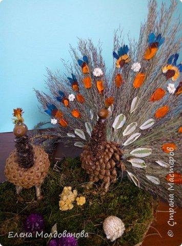 Павлины сделаны из шишек, камыша, высушенных цветов, мха и сухоцветов фото 3
