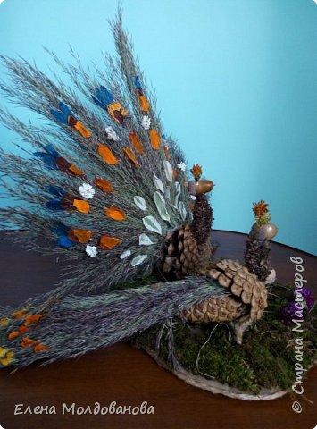 Павлины сделаны из шишек, камыша, высушенных цветов, мха и сухоцветов фото 2