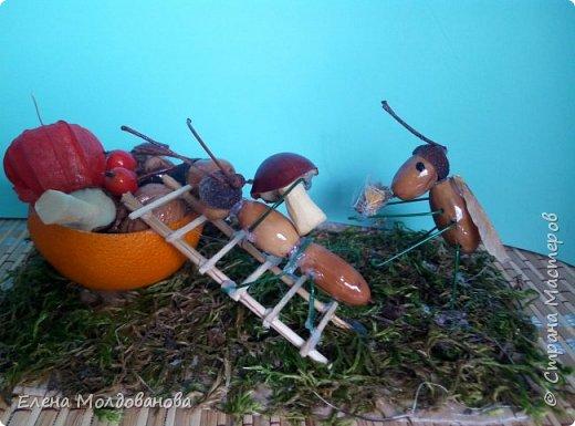 Павлины сделаны из шишек, камыша, высушенных цветов, мха и сухоцветов фото 17