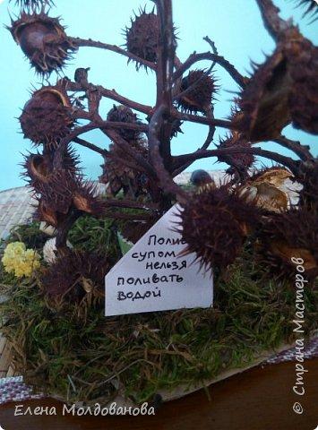 Павлины сделаны из шишек, камыша, высушенных цветов, мха и сухоцветов фото 9