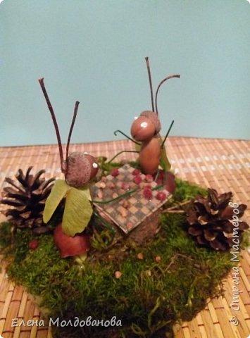 Павлины сделаны из шишек, камыша, высушенных цветов, мха и сухоцветов фото 12