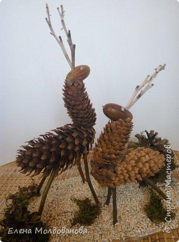 Павлины сделаны из шишек, камыша, высушенных цветов, мха и сухоцветов фото 30