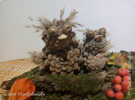 Павлины сделаны из шишек, камыша, высушенных цветов, мха и сухоцветов фото 28