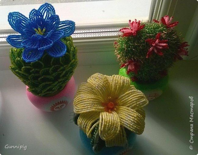 Вот такие кактусики у меня получились! Попросили в подарок, ну я и сплела... По мне, вышло очень даже симпатично) фото 1