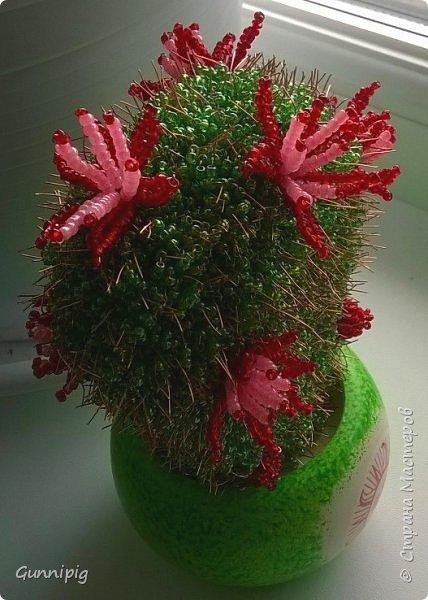 Вот такие кактусики у меня получились! Попросили в подарок, ну я и сплела... По мне, вышло очень даже симпатично) фото 3