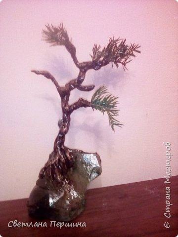 Мои деревья из гипса)) фото 1