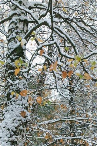 Доброго всем дня!!  Приглашаю на прогулку по первому снегу!! фото 4
