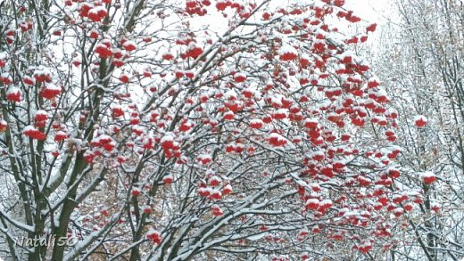 Доброго всем дня!!  Приглашаю на прогулку по первому снегу!! фото 6
