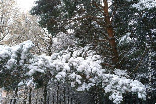 Доброго всем дня!!  Приглашаю на прогулку по первому снегу!! фото 5