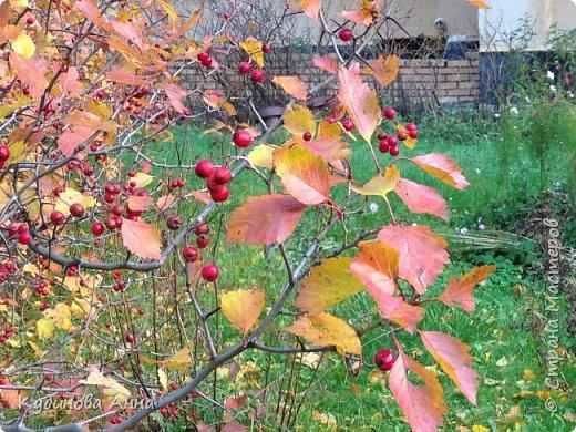 В этом году отреставрировали пруды возле нашего дома в Красногорске. И теперь там вот такая красота. В середине октября было пару солнечных ярких денечков и солнышко украсило своим сиянием все вокруг. Листики стали на солнышке волшебными, золотистыми и янтарными. Вот такой подарок!!!  фото 18