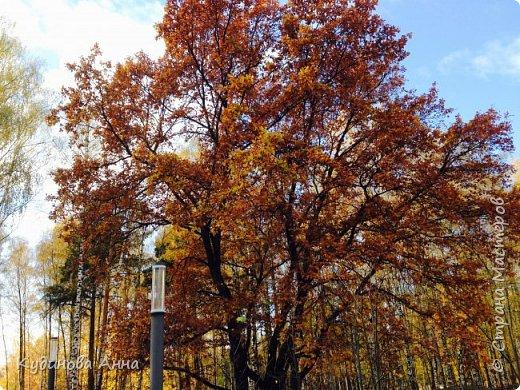 В этом году отреставрировали пруды возле нашего дома в Красногорске. И теперь там вот такая красота. В середине октября было пару солнечных ярких денечков и солнышко украсило своим сиянием все вокруг. Листики стали на солнышке волшебными, золотистыми и янтарными. Вот такой подарок!!!  фото 12